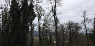 0.49 Acre – VL 4th Street, West Salem, Oregon